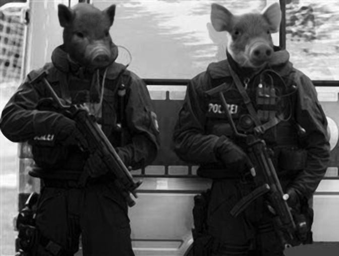 policepigs
